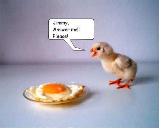 20051105_egg_jimmy_answer_me_please.jpg